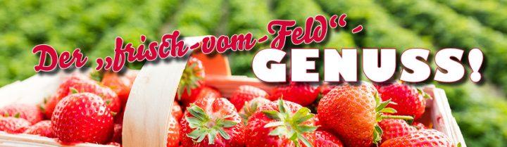 frische Erdbeeren aus Ihrem WASGAU Frischemarkt