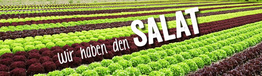 Zeit für Salat!