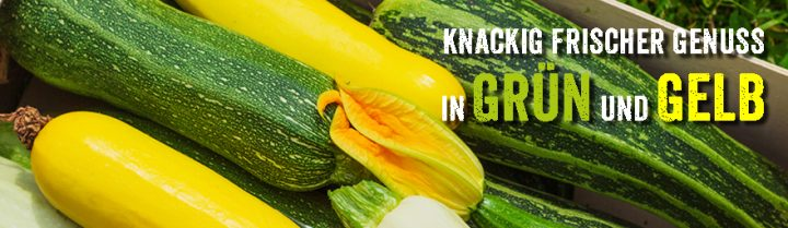 Zucchini und Gurken